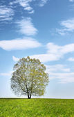 Summer landscape with lonely tree against blue cloudy sky — Stock Photo