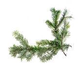 Design element. Corner of spruce branches — Stock Photo