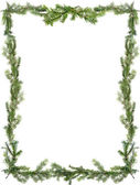 Design element. Frame of spruce branches — Stock Photo
