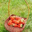 Large strawberry in a basket on a green grass — Stock Photo #8176142