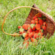 Large strawberry in a basket on a green grass — Stock Photo