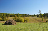 Glade with mowed hay in the forest — Stock Photo