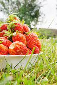 Large strawberries on the green grass — Stock Photo