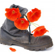 Old army boot and red poppy flowers in it — Stock Photo