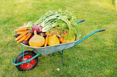 The new harvest. Many different vegetables lie in the garden cart — Stock Photo