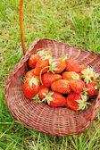 Fresa grande en una cesta en un pasto verde — Foto de Stock