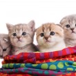 Kittens sit in a bag - Stock Photo