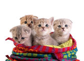 The kittens — Stock Photo