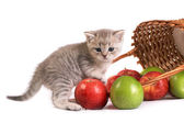 Kitten and a basket with apples — Stock Photo