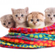 Kittens sit in a bag — Stock Photo