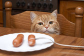 The red cat steals sausage from a plate — Stock Photo