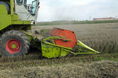 Combine harvesting crops — Stock Photo