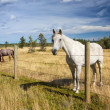 Beautiful horse behind a farm fence — Stock Photo