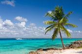 Palm tree on the tropical beach, Saona Island, Caribbean Sea — Stock Photo