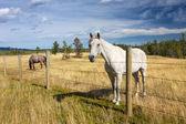 Beautiful horse behind a farm fence — Stock Photo
