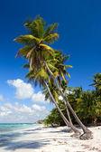 Palm trees on the tropical beach, Saona Island, Caribbean Sea — Stock Photo