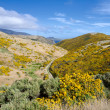 New Zealand landscape. Mountains covered by yellow flowers. — Stock Photo