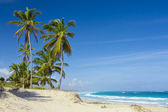 Palm trees on the tropical beach, Dominican Republic — Foto Stock