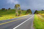 ニュージーランドの塗装二重黄色ラインと道路 — ストック写真
