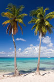 Two palm trees on a tropical beach, Saona Island, Caribbean Sea, — Stock Photo