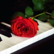 Red rose on the piano — Stock Photo #9755968