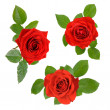 Set of three open red roses with leaves — Stock Photo #8625213