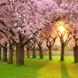 Fascinating springtime scenery - Stock Photo