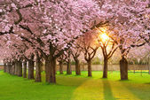 Fascinating springtime scenery — Foto de Stock