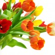 Colorful bouquet of tulips on white — Stock Photo