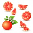 Fresh grapefruit with flowers - Stock Vector