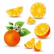 Fresh orange with flowers - Stock Vector