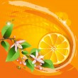 Abstract background with juicy slice of orange fruit — Stock Vector #10203636