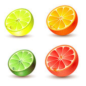Set of citrus fruit — Stock Vector