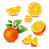 Fresh orange with flowers — Stockvector
