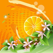 Abstract background with juicy slice of orange fruit — Stock Vector