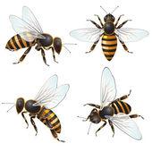 Set of bee — Stock Vector