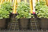 Ornamental plants — Stockfoto