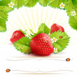 Stock Vector: Strawberry with leafs