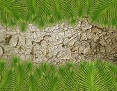 Leaf on ground — Stock Photo