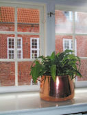 Plant in window — Foto de Stock