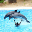 Two dolphins jumping over instructor — Stock Photo