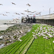 Seagulls at boardwalk — Stock Photo