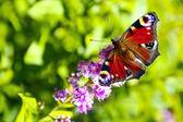 World of butterflies. — Stock Photo