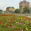 Stock Photo: City Of Anapa.