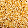 Yellow corn grain — Stock Photo
