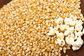 Pop-corn and corn grain — Stock Photo