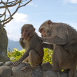 Funny monkeys — Stock Photo