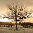 Big oak at the winter — Stock Photo