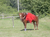 A girl in a red skirt stroking a horse — Stock Photo