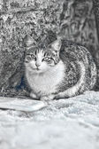 HOMELESS CAT — Stock Photo